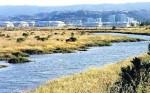 Bair Island Redwood City Wildlife Refuge & Wetlands